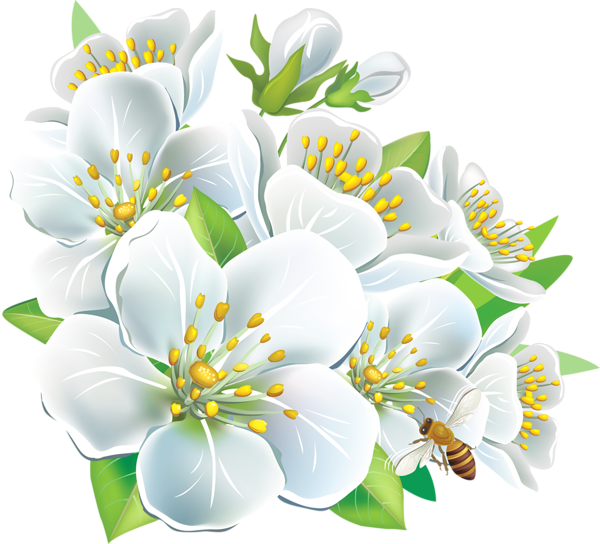 Poetry clipart bloom. White flower png large