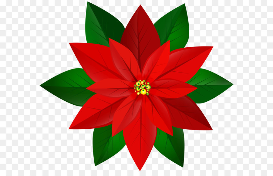 Poinsettia clipart. Clip art christmas red