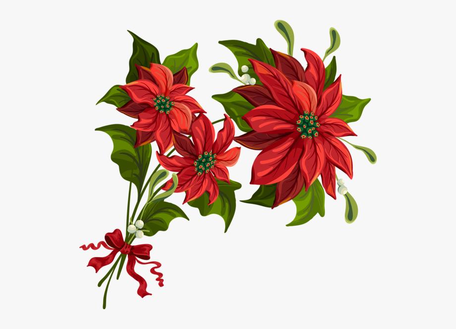 Free christmas transparent . Poinsettia clipart beautiful