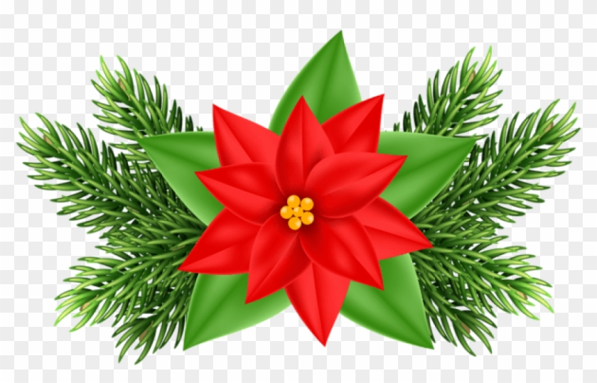 Poinsettia clipart beautiful. Free png christmas deco