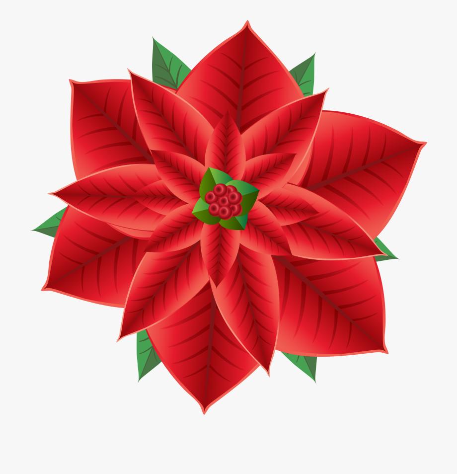 Poinsettias clipart single. Poinsettia transparent background clip