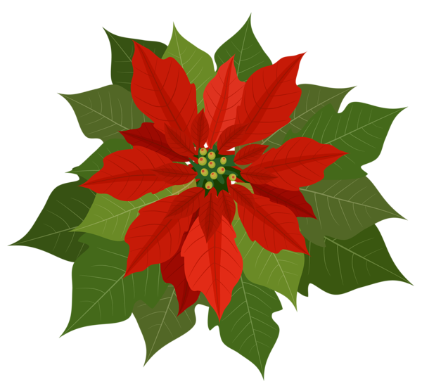Poinsettias clipart candel. Gallery free pictures