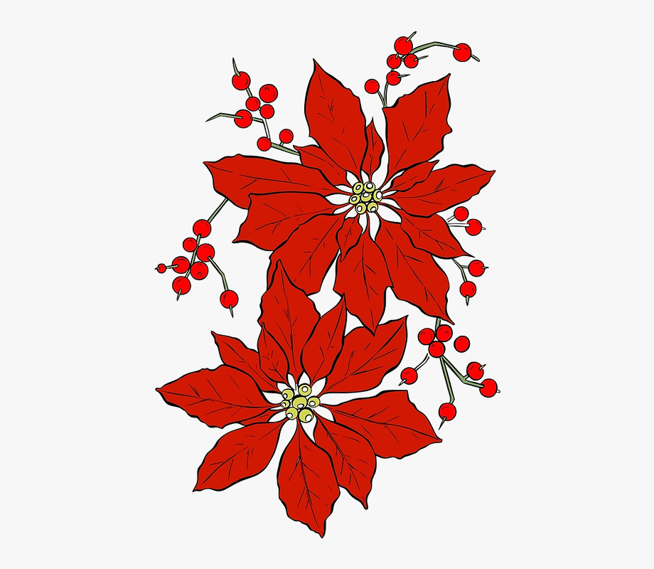 Christmas red . Poinsettia clipart december flower