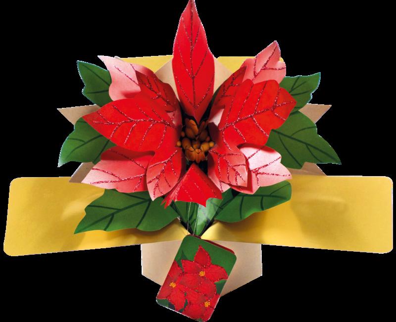 Christmas regular pop ups. Poinsettia clipart december flower