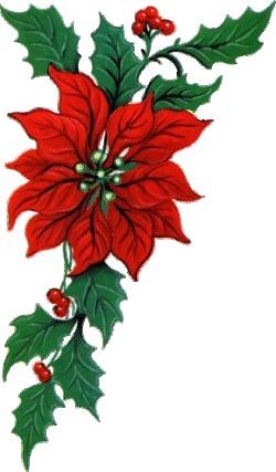 Free poinsettia flower cliparts. Poinsettias clipart swag