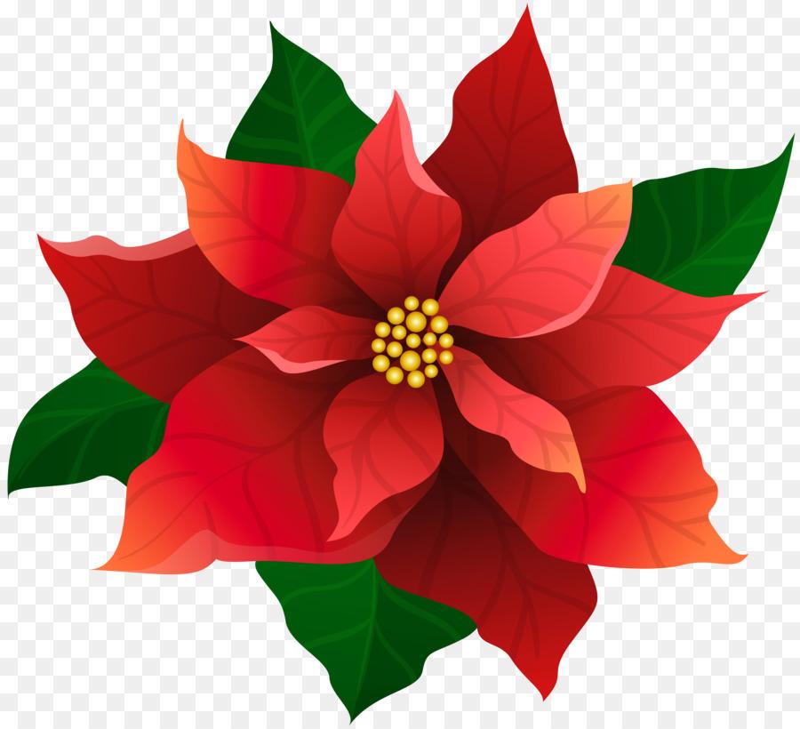 Poinsettias clipart clip art. Christmas poinsettia flower drawing