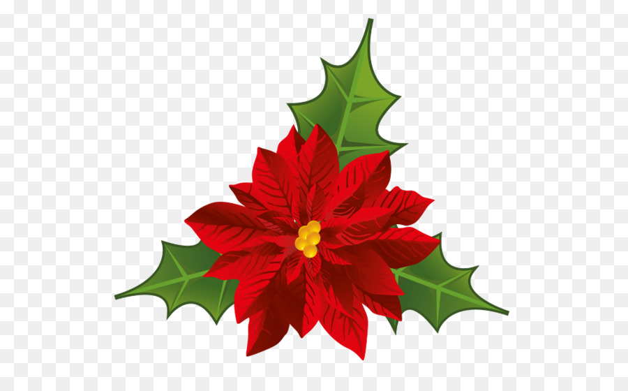 Christmas png download free. Poinsettia clipart flowering plant