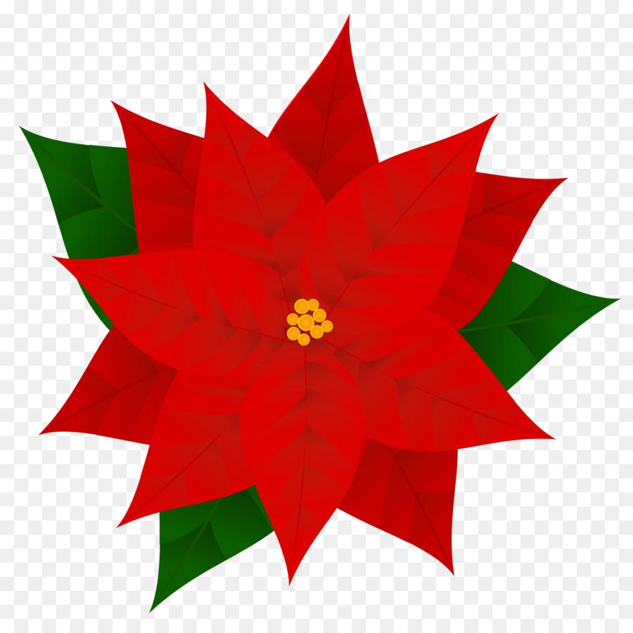 Poinsettia clipart flowering plant. Christmas flower