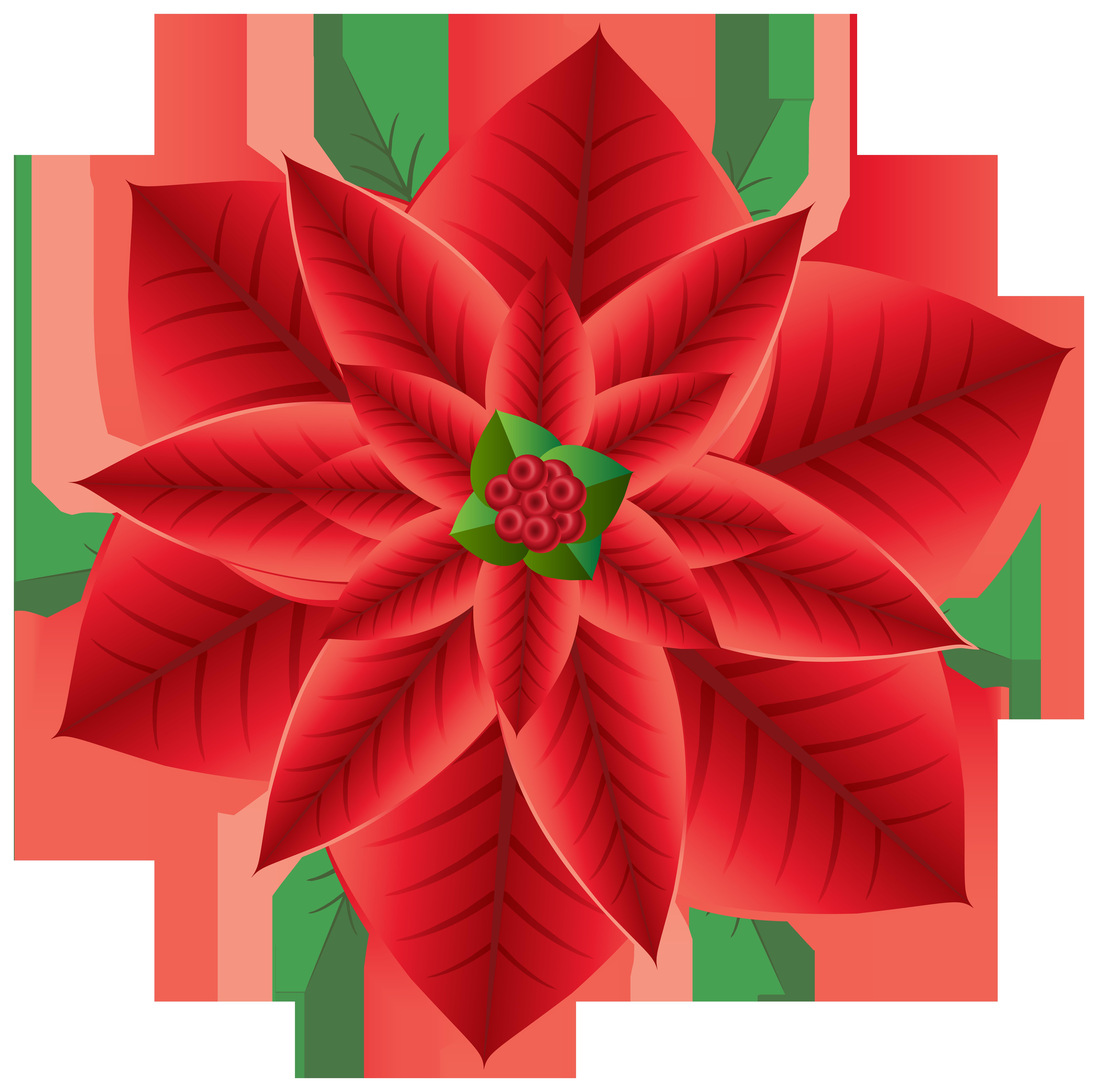 Poinsettia clipart kid. Christmas transparent png clip
