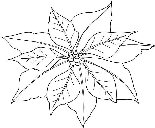 Poinsettia image coloring page. Poinsettias clipart outline