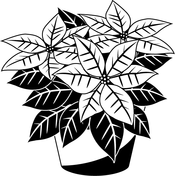 collection of christmas. Poinsettias clipart outline