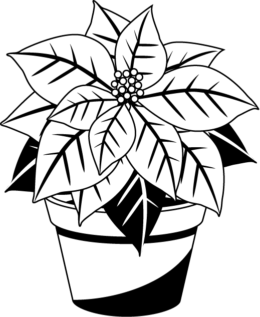 Poinsettias clipart outline.  collection of christmas