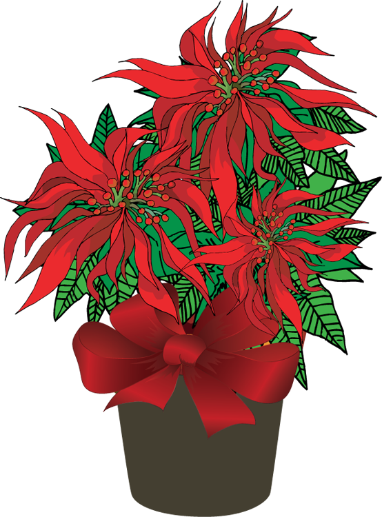 poinsettias clipart poinsettia flower