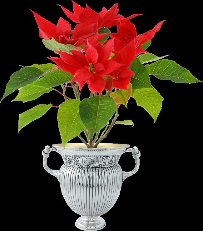 Poinsettia clipart poinsettia corner. Forgetmenot in pots