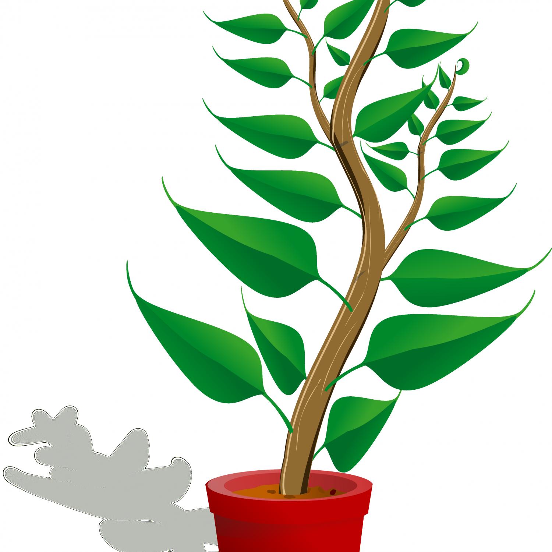 Clip art mehmetcetinsozler com. Poinsettia clipart potted plant