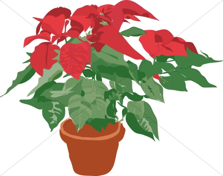 Traditional christmas decoration . Poinsettia clipart potted plant