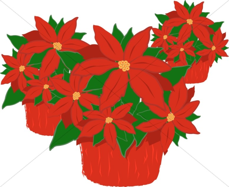 poinsettia clipart potted plant