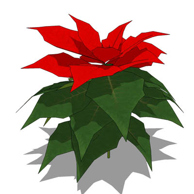Poinsettia clipart small plant. Free plants pictures download