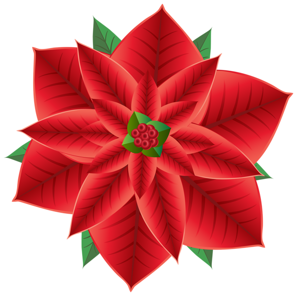 Poinsettias clipart transparent background. Gallery free pictures