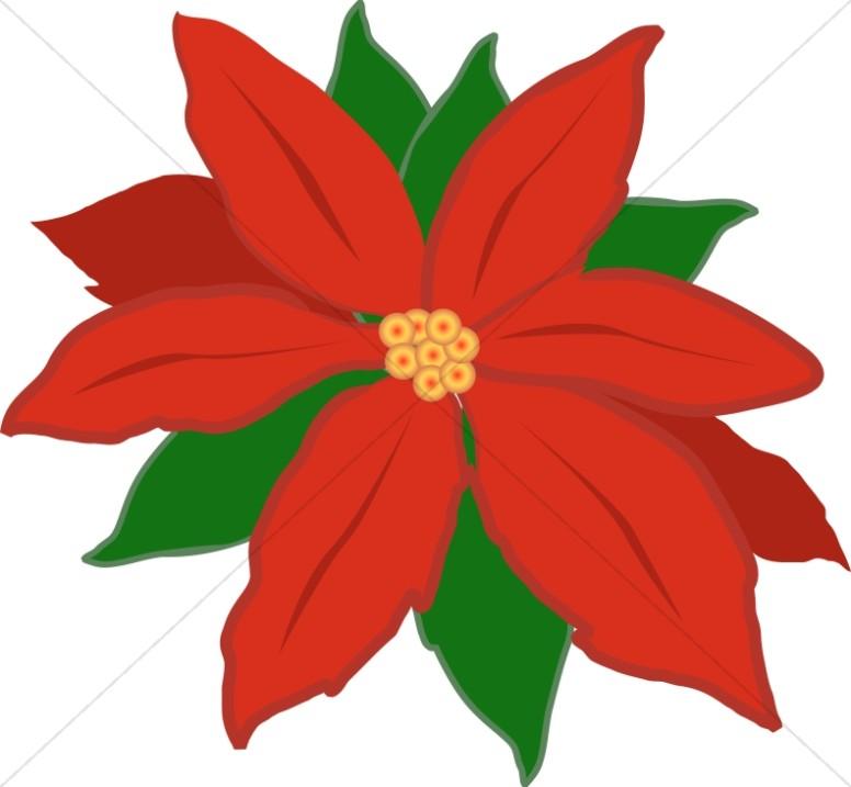 Poinsettias clipart. Red poinsettia flower religious