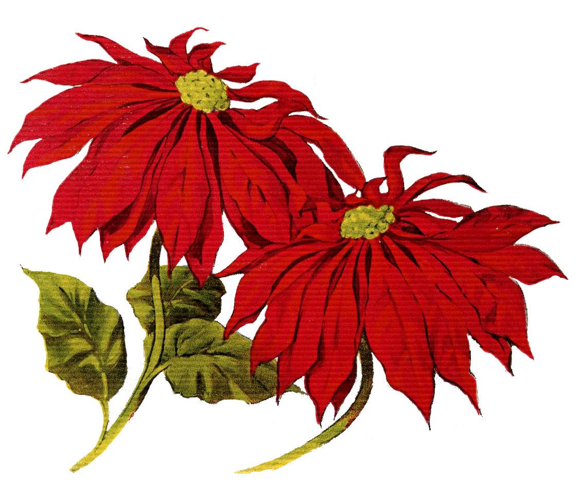 Poinsettias clipart. Vintage christmas clip art