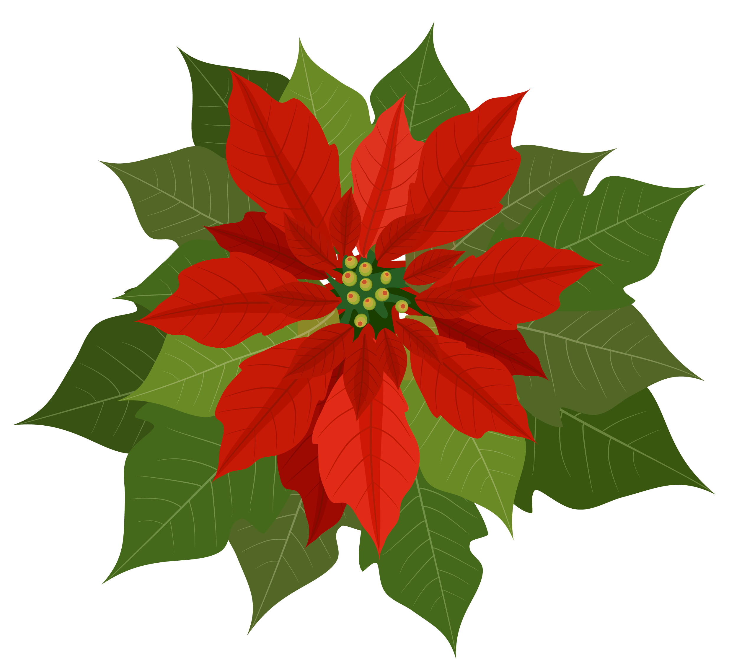 Free poinsettias cliparts download. Poinsettia clipart