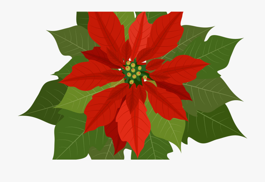 Poinsettias clipart cartoon. Christmas flowers download free