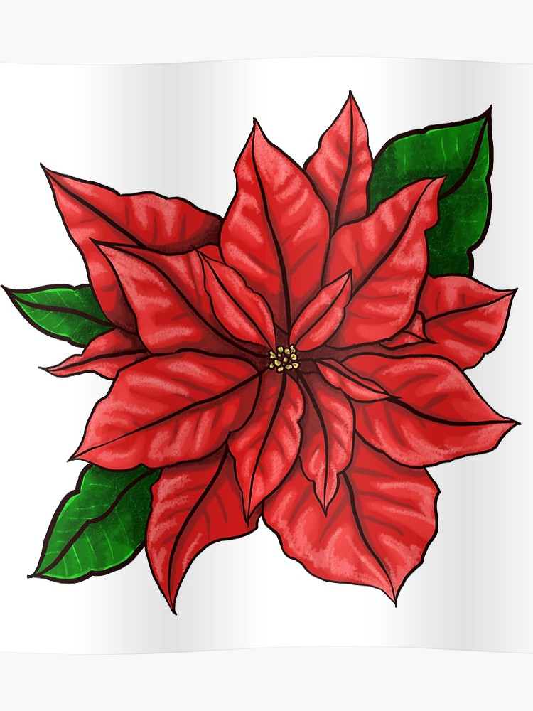 Poinsettia clipart december flower. Birth poster
