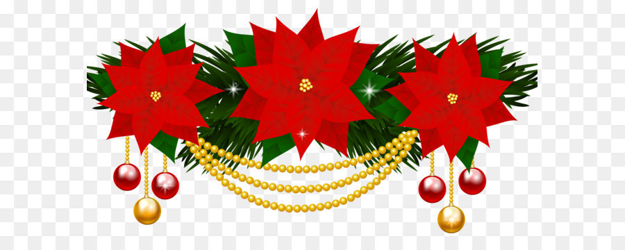 Christmas poinsettia png download. Poinsettias clipart poinsetta