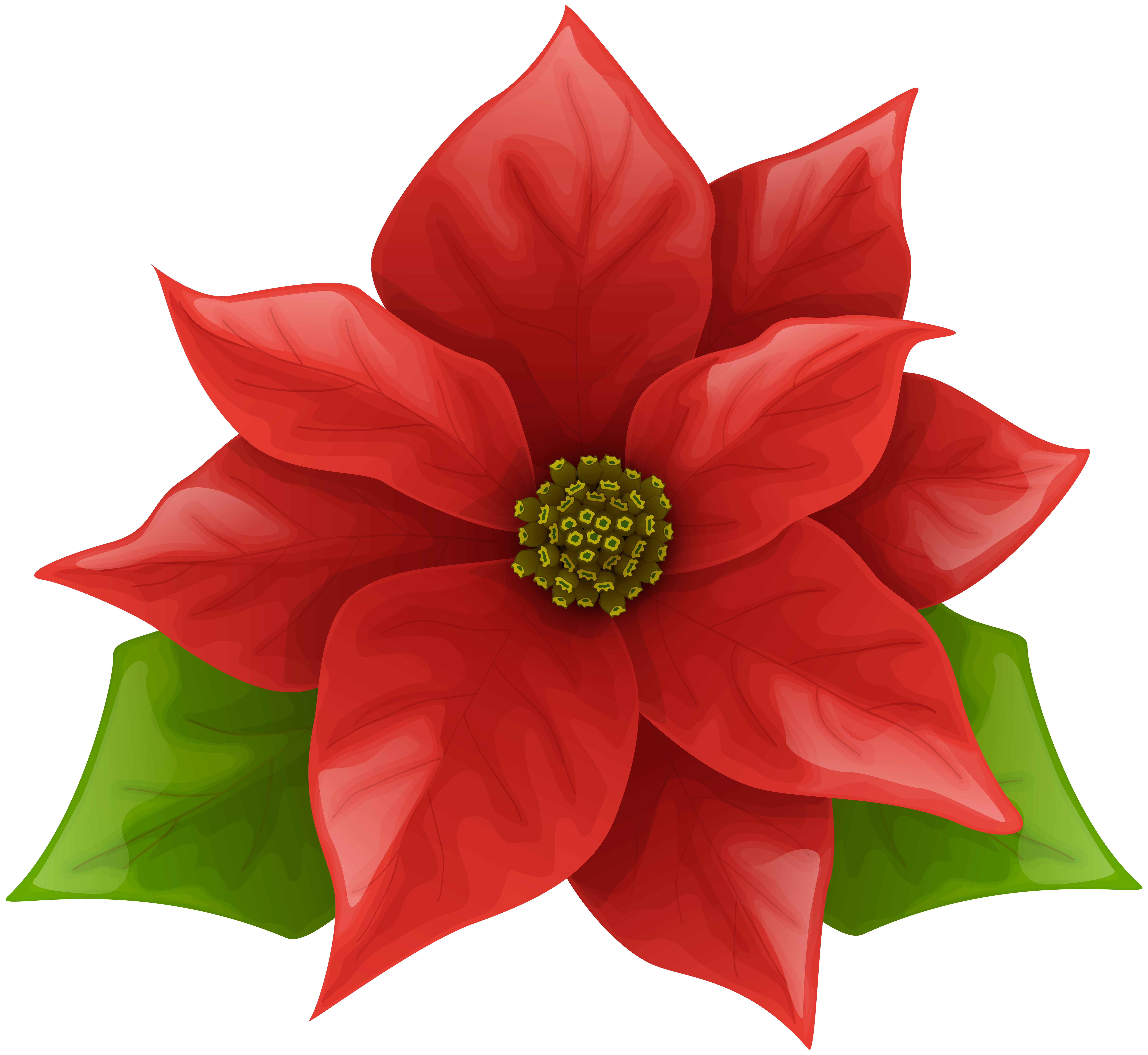 Poinsettias clipart poinsetta. Clip art images gallery