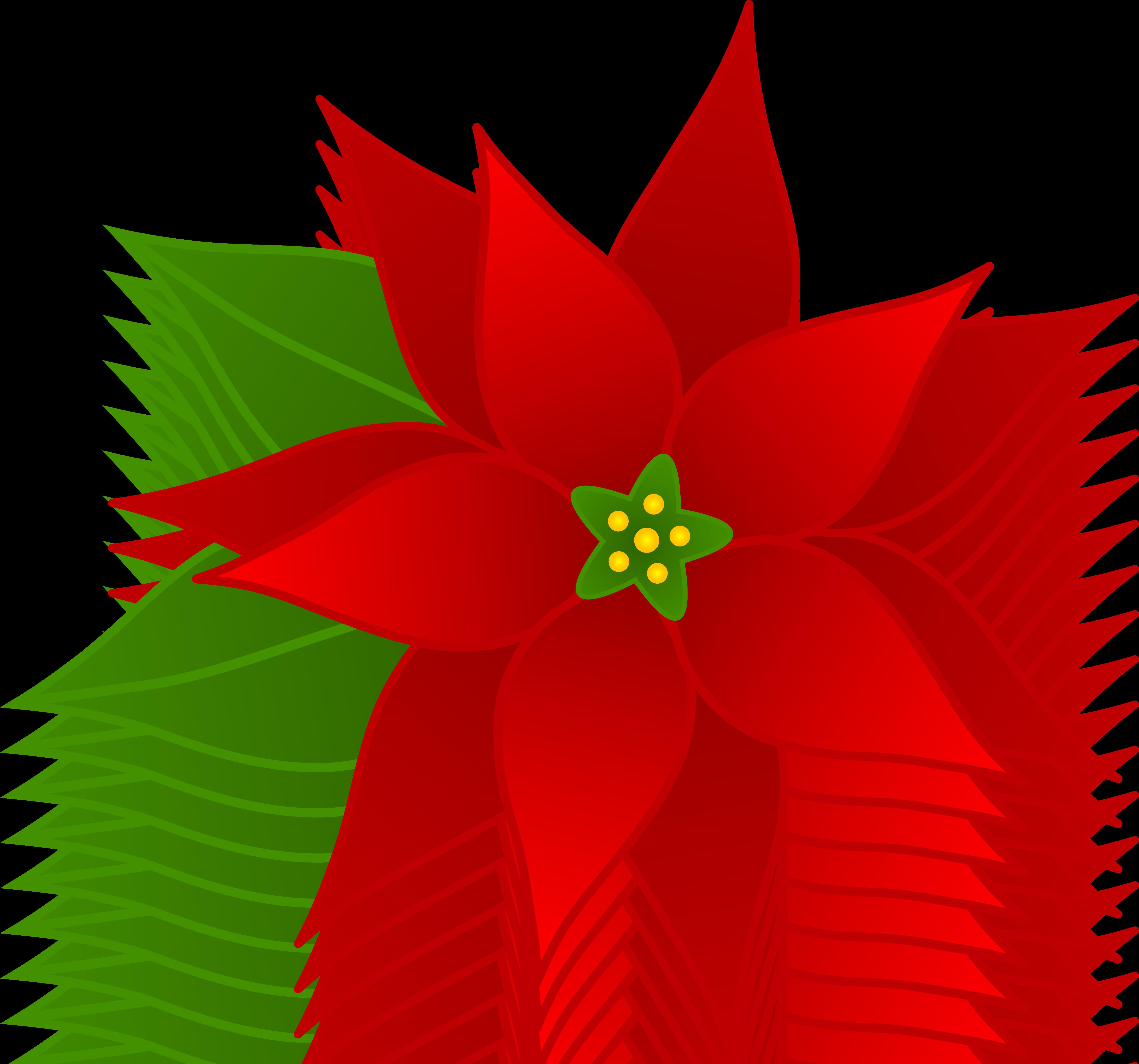 Poinsettias clipart. Free cliparts download clip