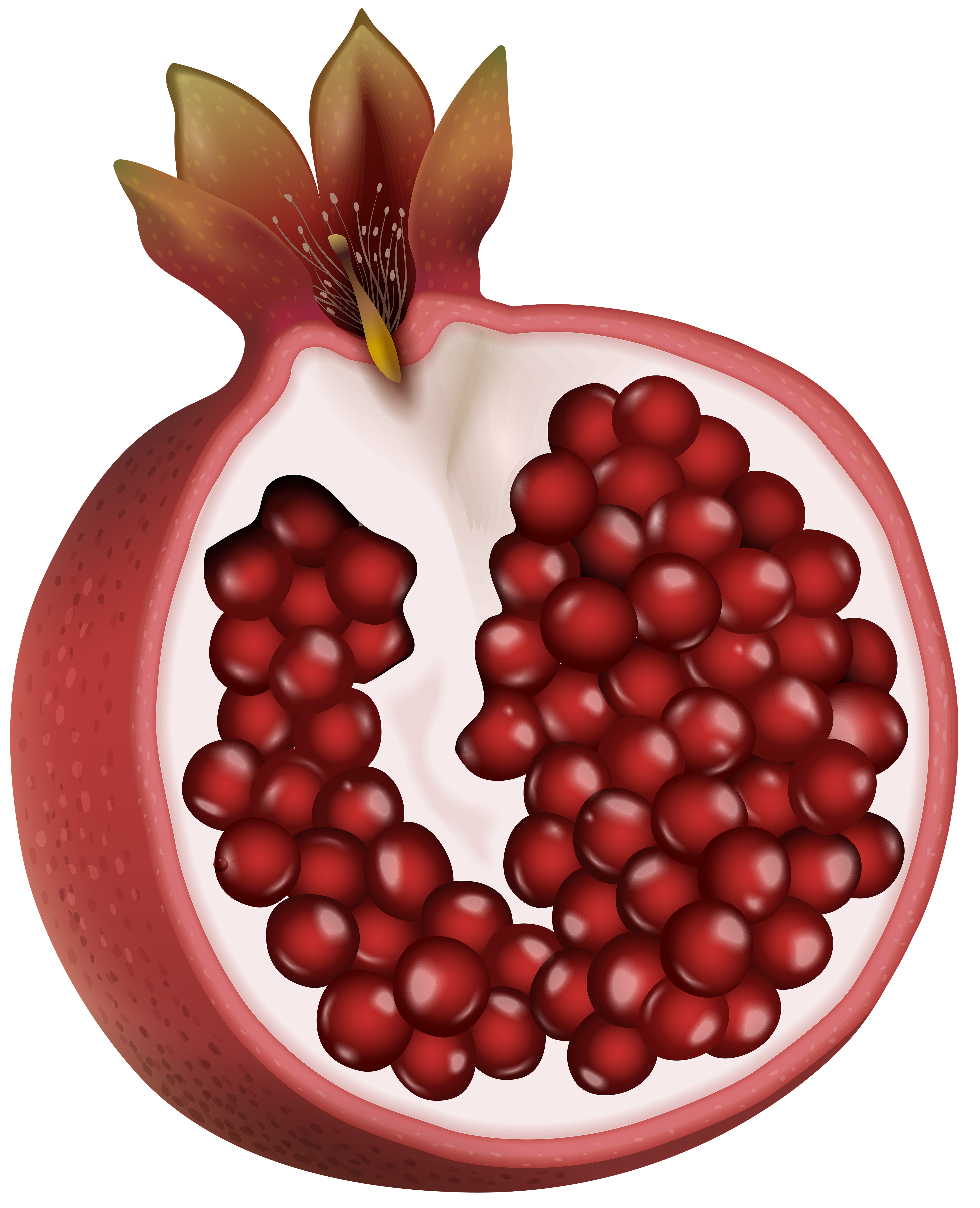 Red png clip art. Fruits clipart pomegranate