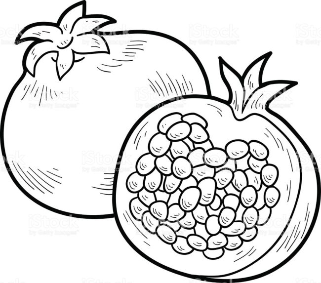 Pomegranate clipart anar. Sketch at paintingvalley com