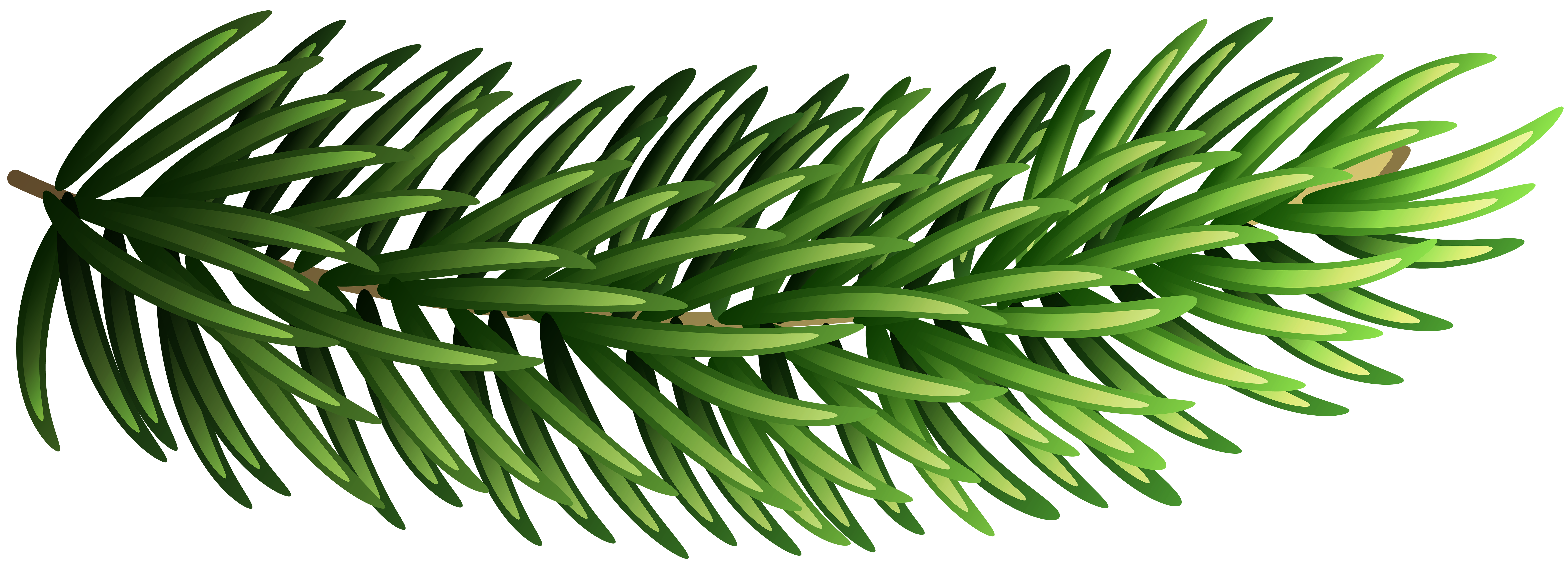 Pomegranate clipart branch. Pine transparent png clip