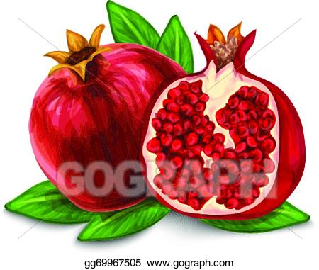 Pomegranate clipart clip art. Vector illustration isolated poster
