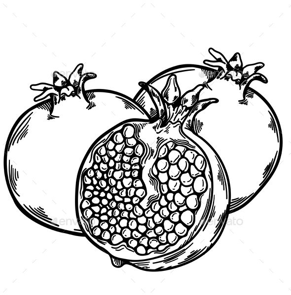 Pomegranate clipart drawing. Fruit sketch tattoo
