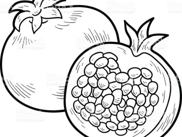 Free download best . Pomegranate clipart drawing