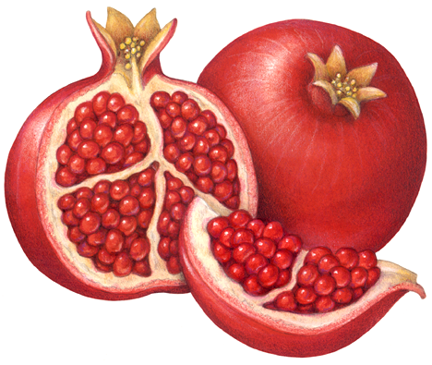 Pomegranate clipart half. A whole with cut