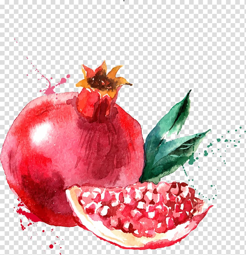 Pomegranate clipart illustration. Free download painting of