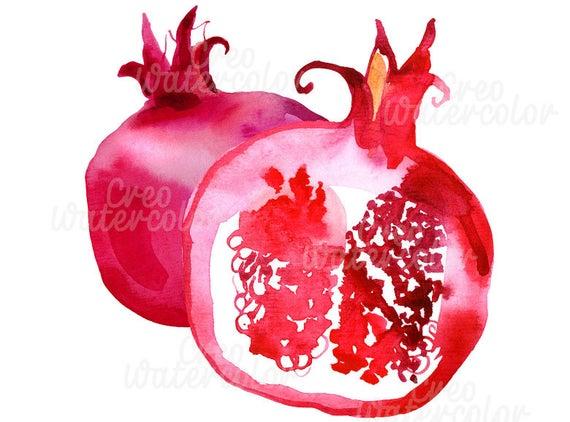 Watercolor fruit digital art. Pomegranate clipart illustration