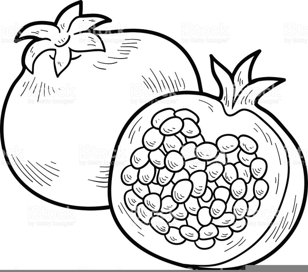 Pomegranates free images at. Pomegranate clipart line art