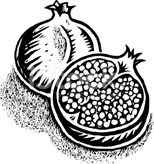 In black and white. Pomegranate clipart line art
