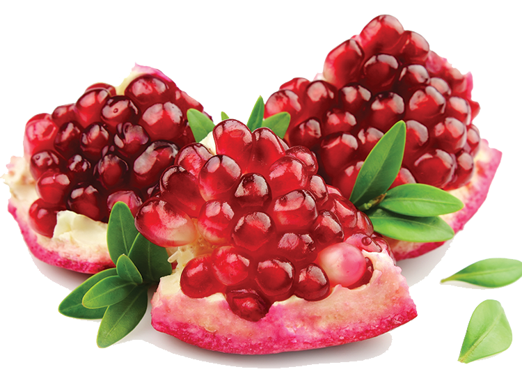 pomegranate clipart one