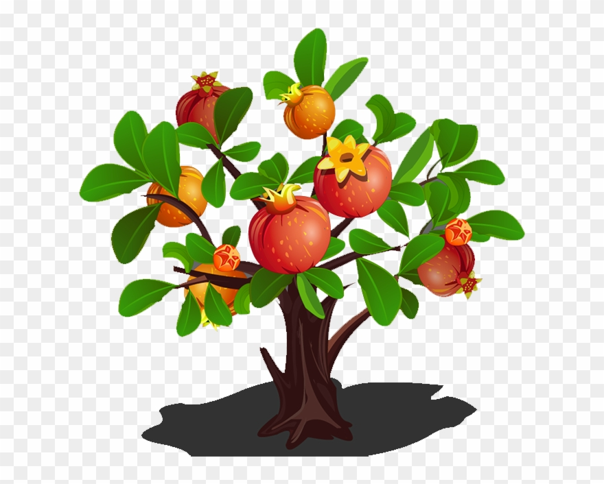 Pomegranate clipart pomegranate tree. Green apple png download
