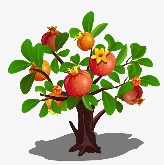 Portal . Pomegranate clipart pomegranate tree