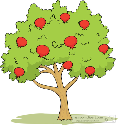 Pomegranate clipart pomegranate tree. Drawing at paintingvalley com