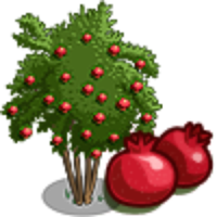 Pomegranate clipart pomegranate tree. Image result for egypt