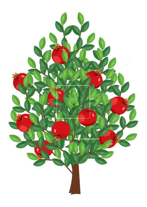 Fruit free vectors illustrations. Pomegranate clipart pomegranate tree