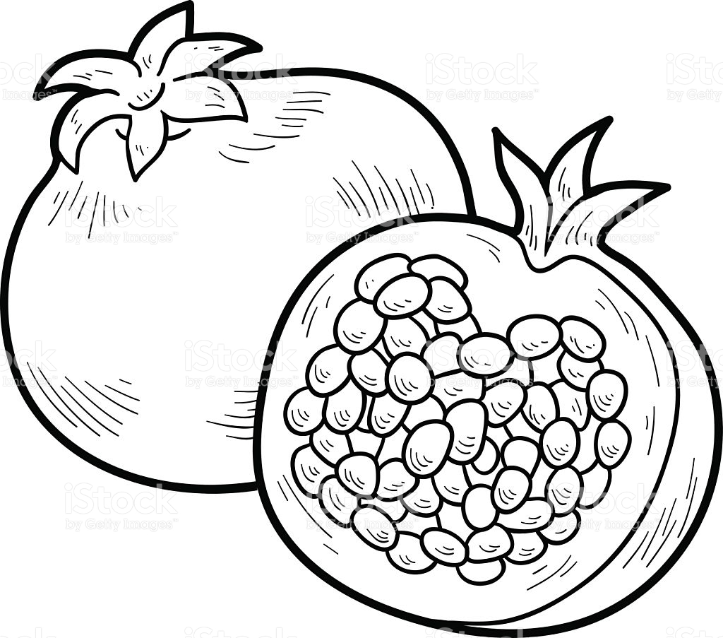 Pomegranate clipart printable. Free download clip art