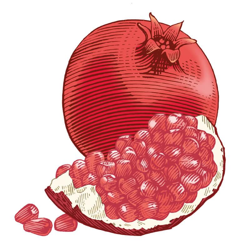 Lip balm . Pomegranate clipart single